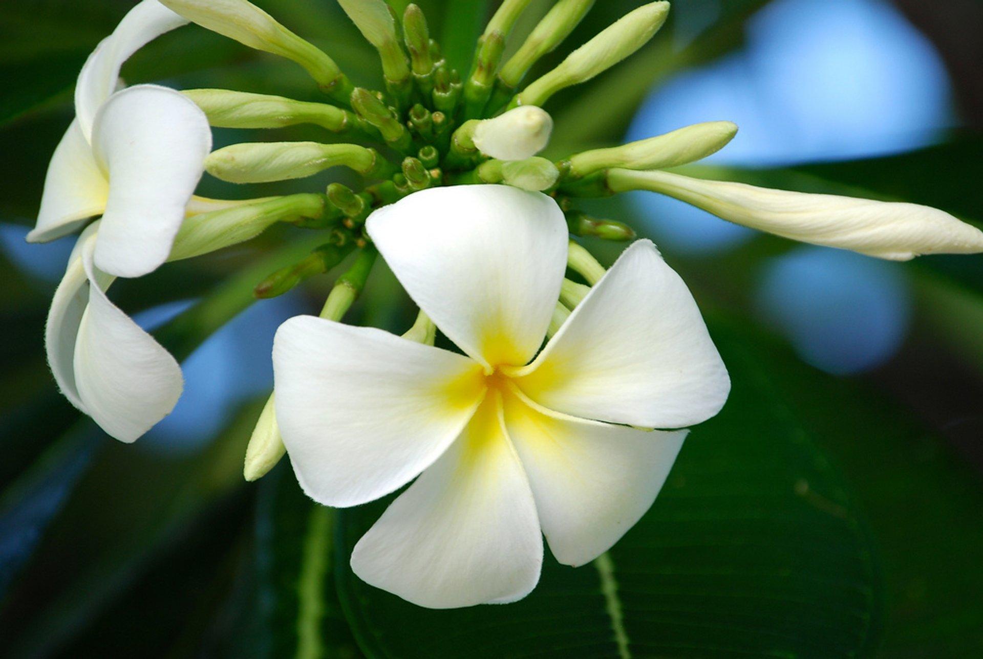 Tiare Tahiti in Tahiti 2020 - Best Time