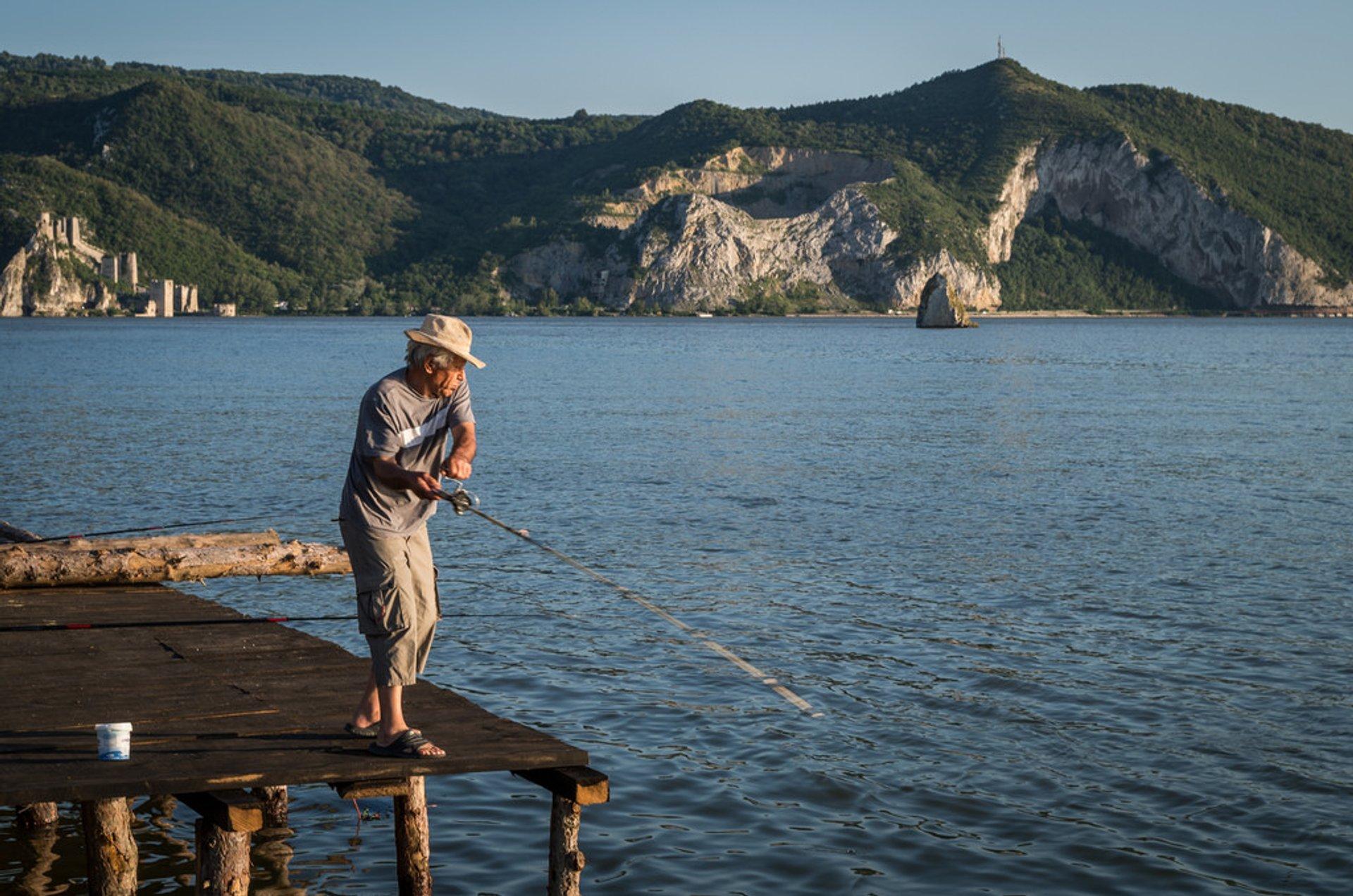 Сatfish Fishing Season in Romania 2019 - Best Time