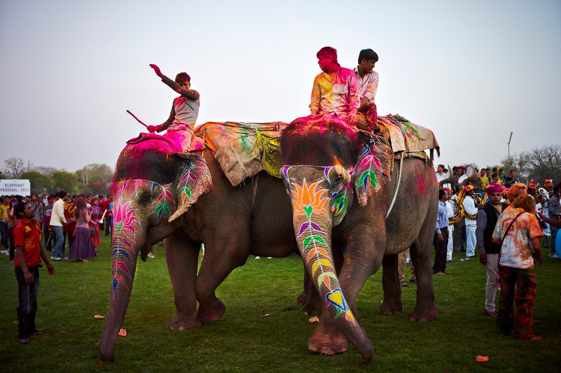 Elephant Festival in India 2020 - Best Time