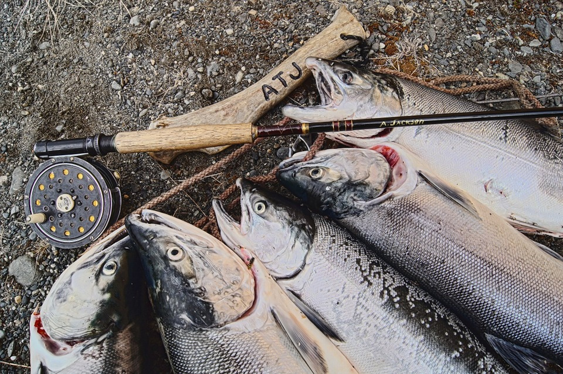 Salmon Fishing in Alaska 2020 - Best Time