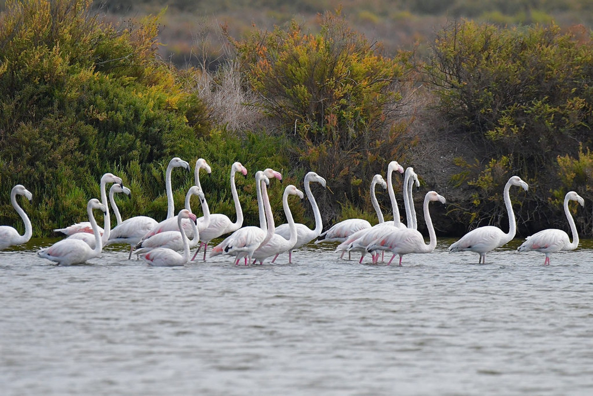 Flamingos in the Tagus Estuary Natural Reserve in Lisbon - Best Time