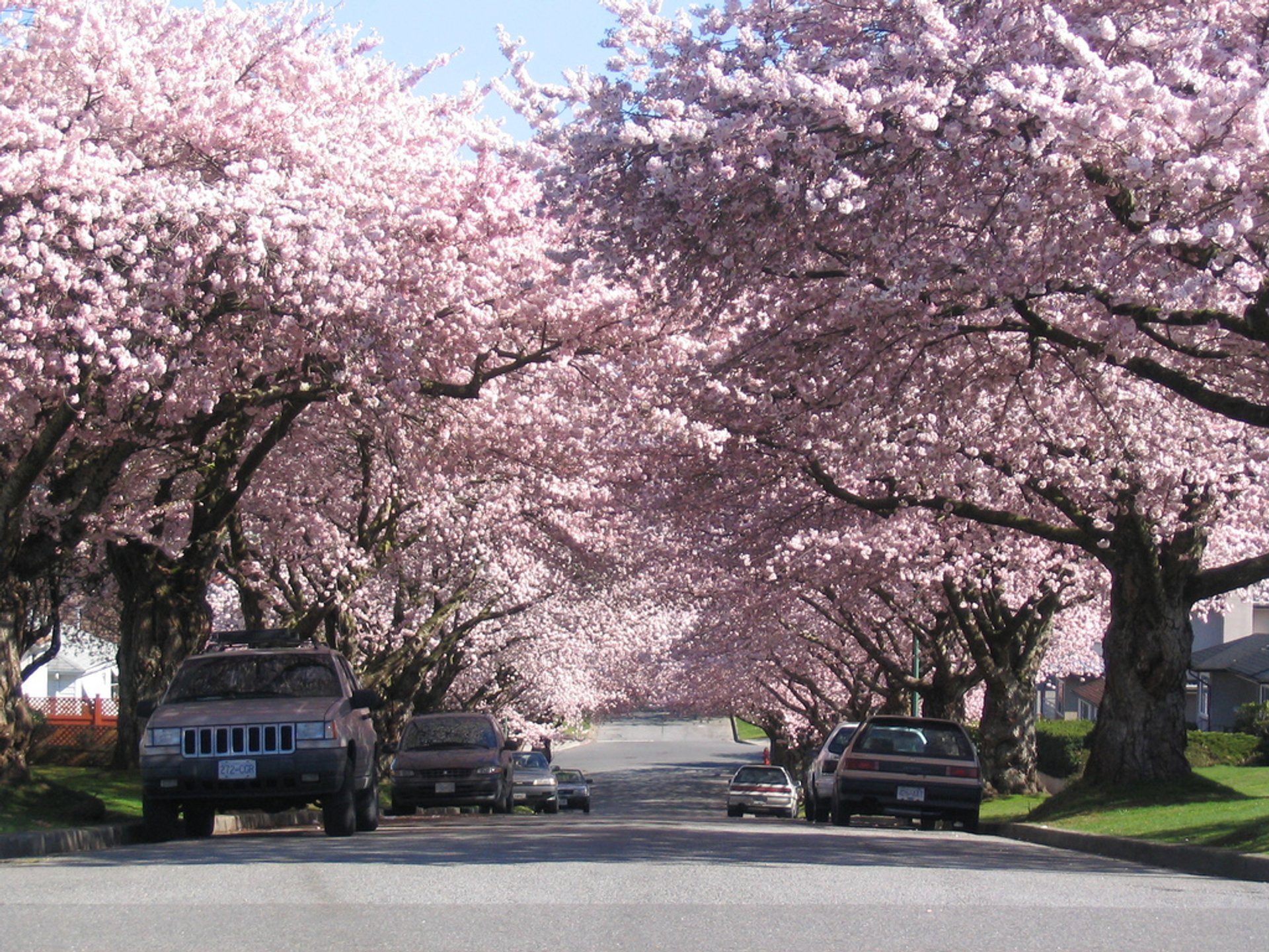 Spring in Vancouver - Best Season 2020