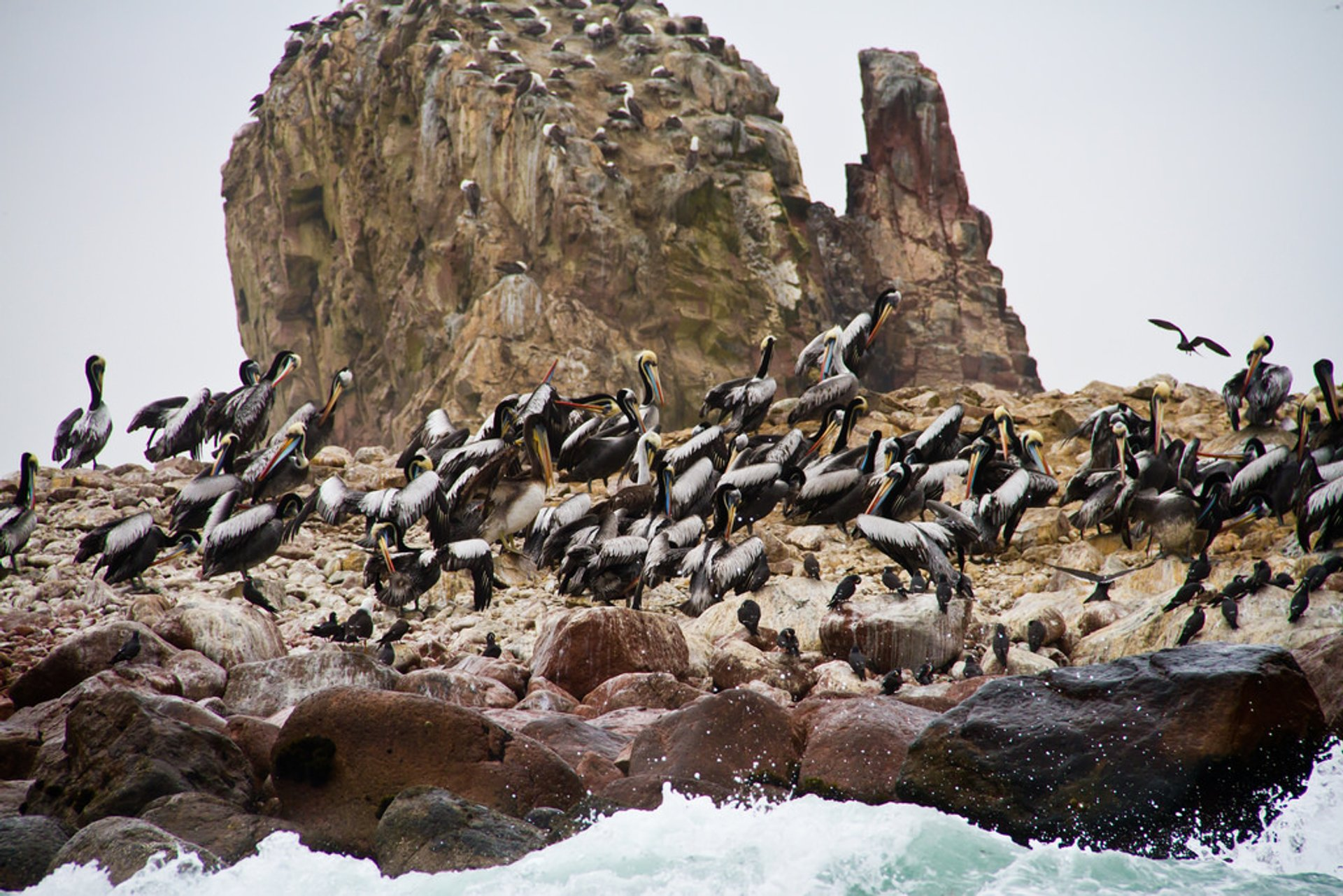 Best time for Marine Fauna of the Ballestas Islands in Peru