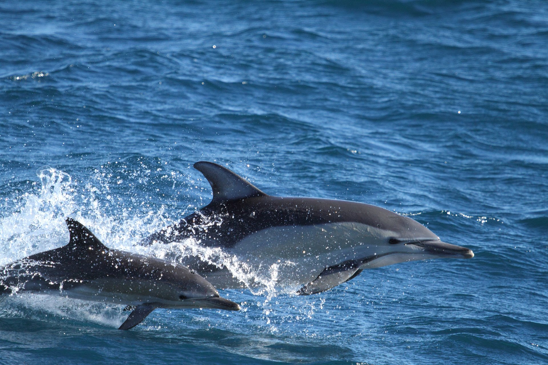 Best time to see Whale & Dolphin Watching in Sydney 2020