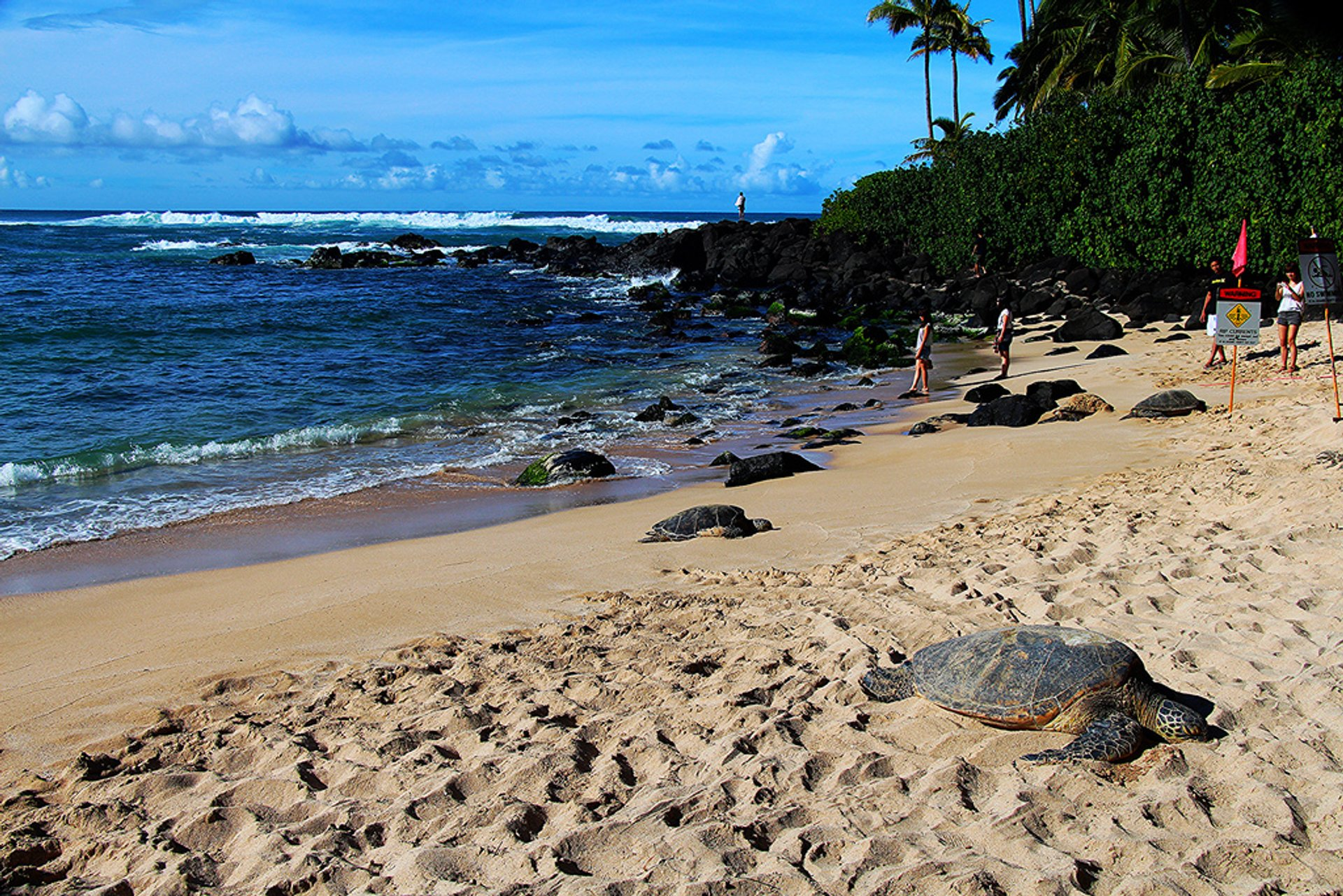 Laniakea or Turtle Beach in Hawaii - Best Season 2020