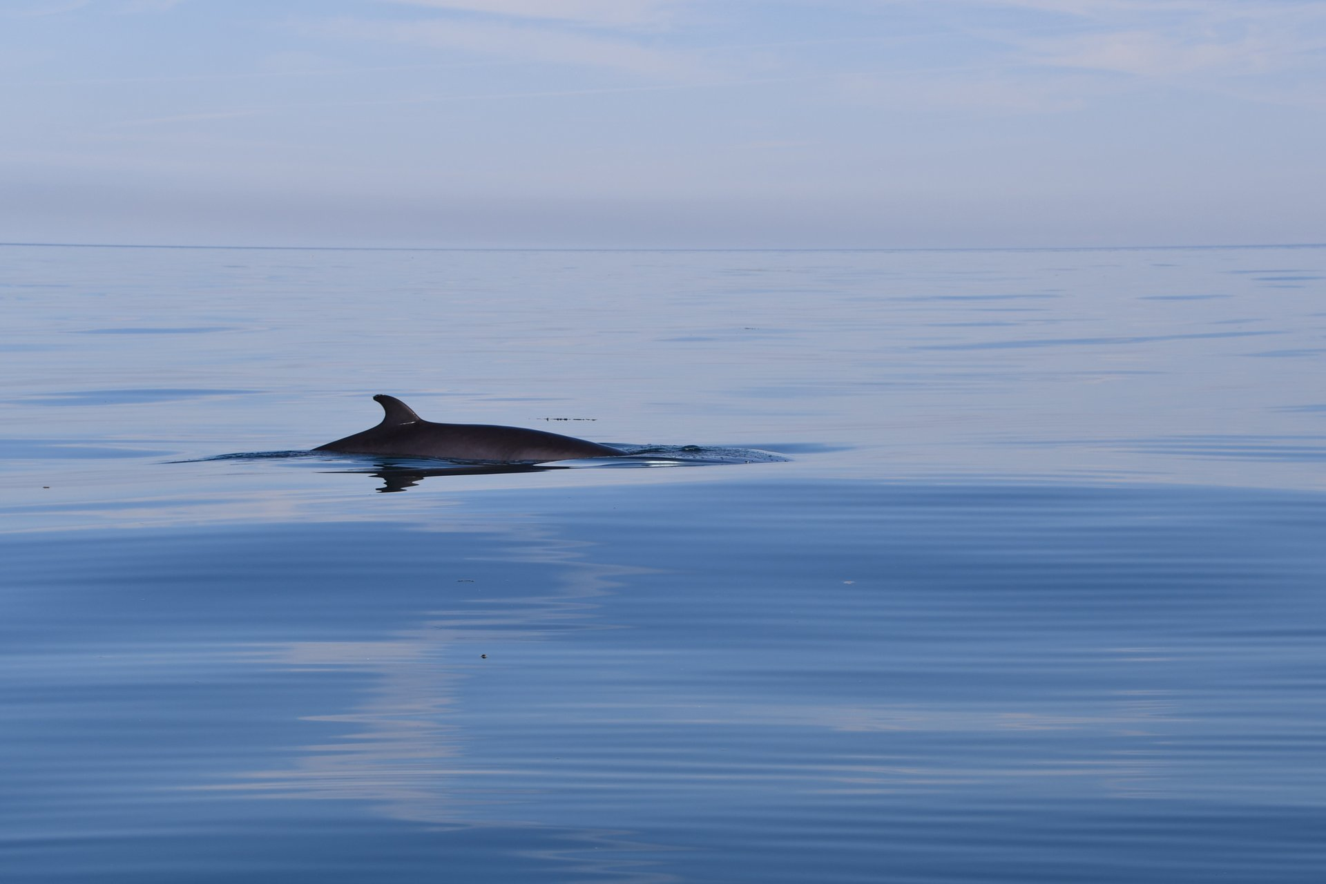 Dolphin & Whale Watching in Wales in Wales 2020 - Best Time
