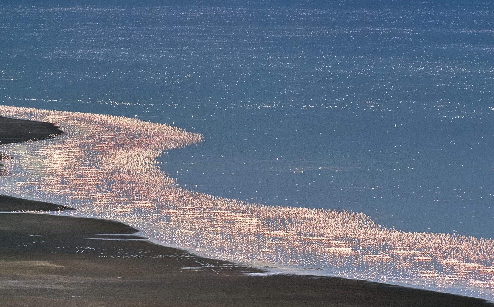 Best time for Flamingos on the Rift Valley Lakes in Kenya 2020