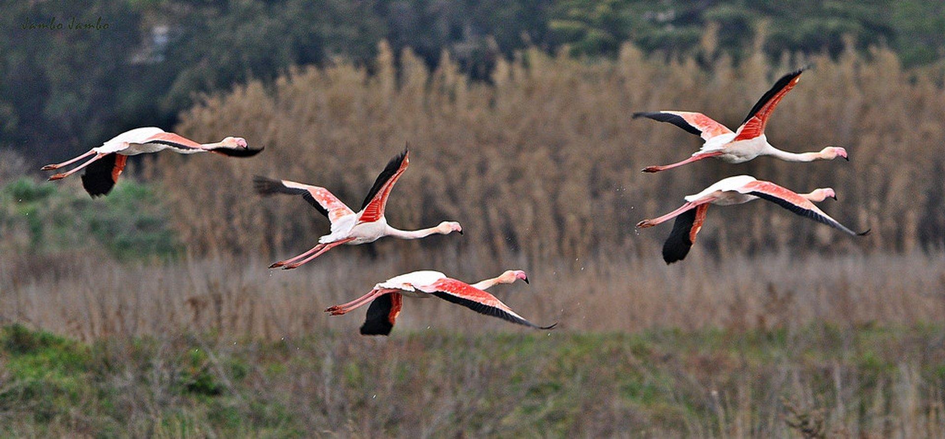 Birdwatching  in Tuscany - Best Season 2020