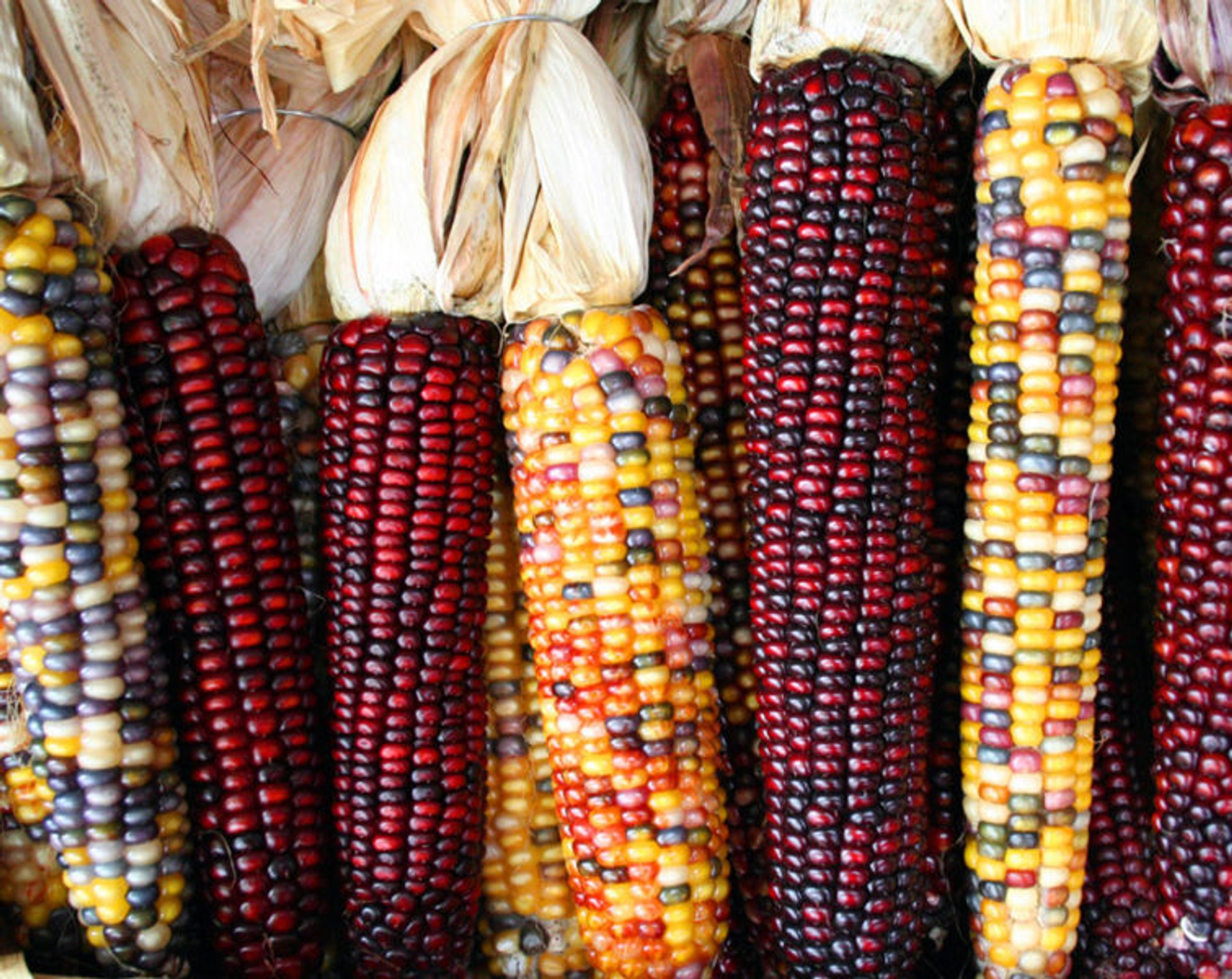 Corn Specialties in Guatemala 2019 - Best Time