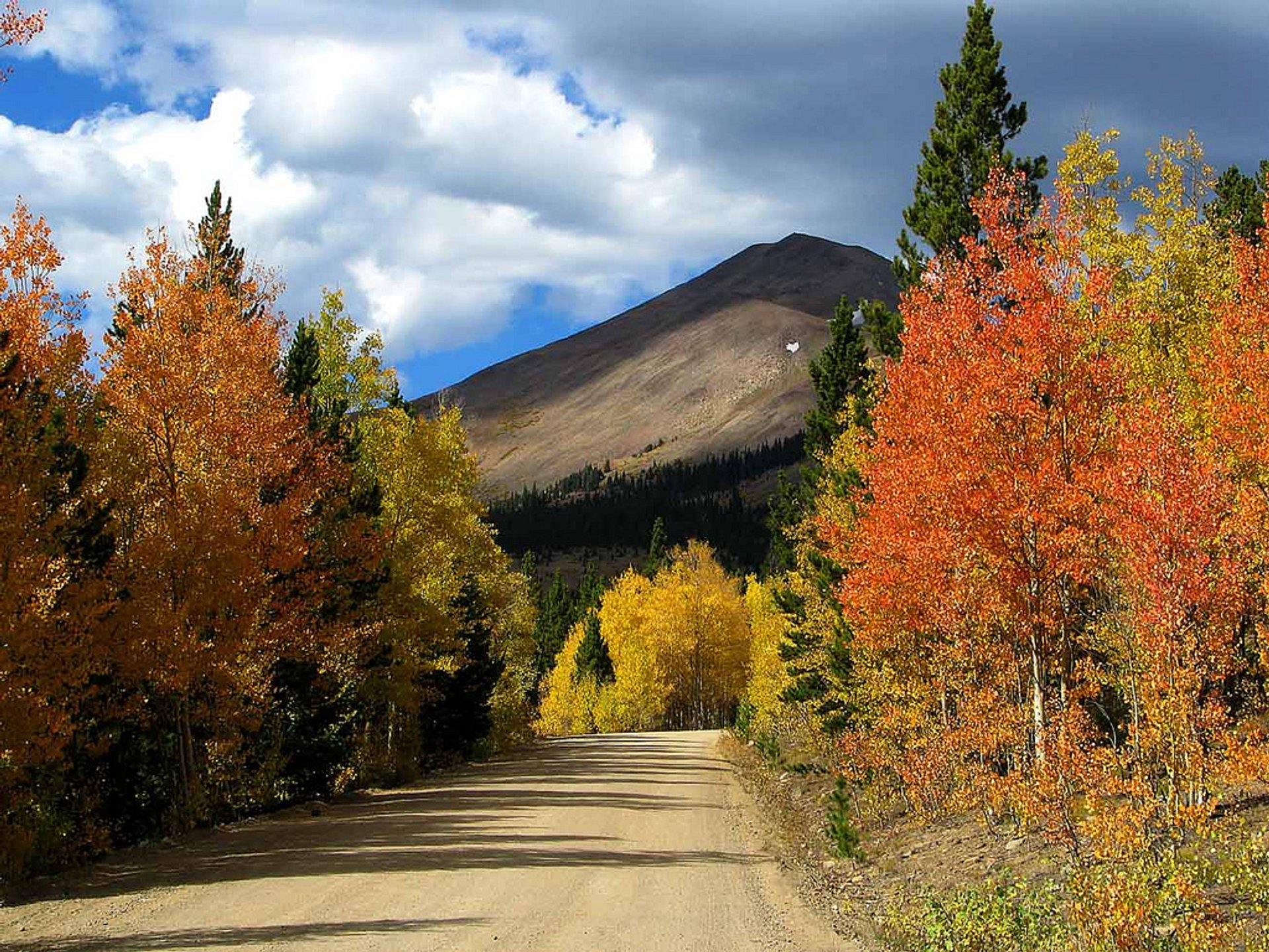 Aspens in color 2020