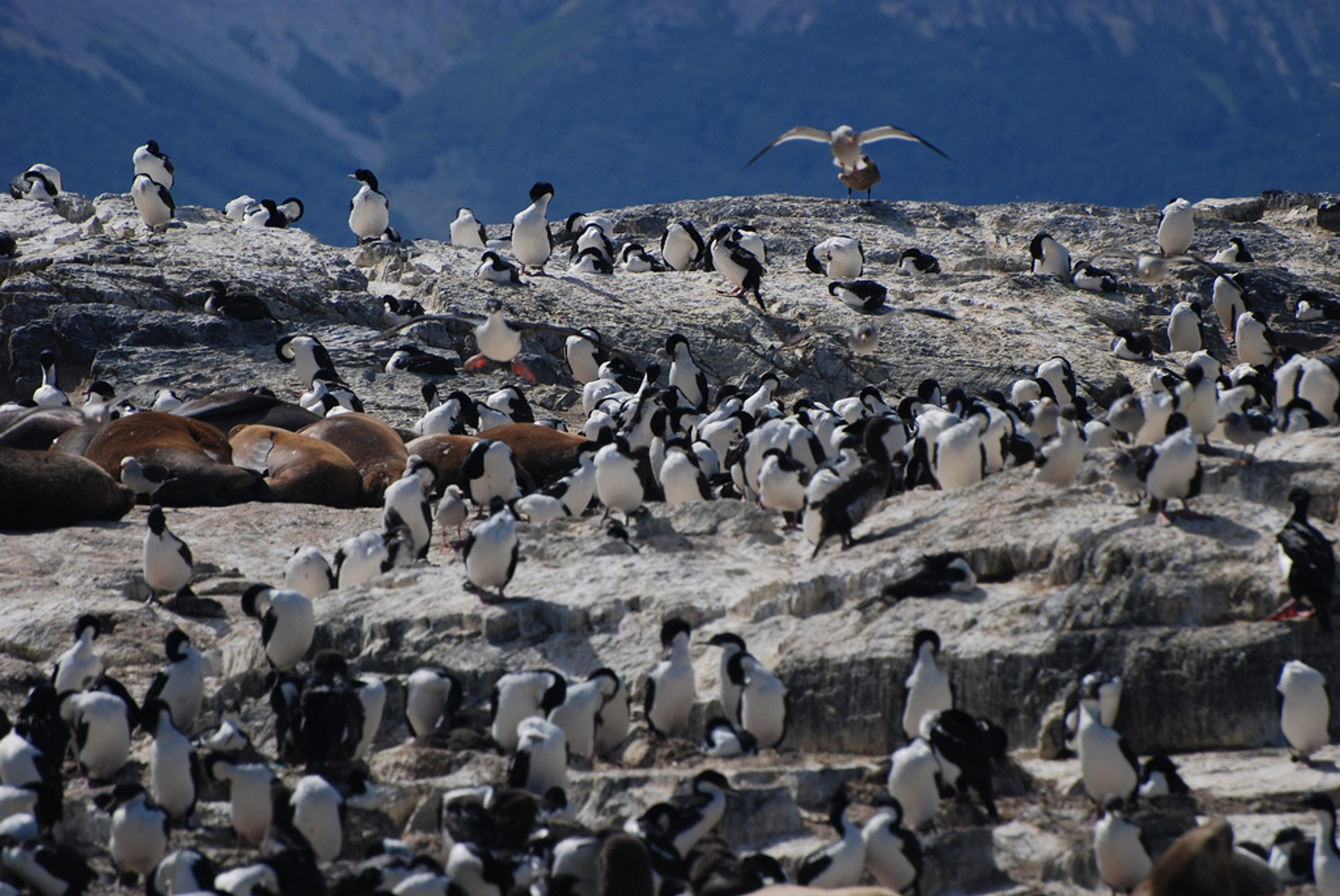 Birds and Seals on Island Near Ushuaia, Argentina 2019