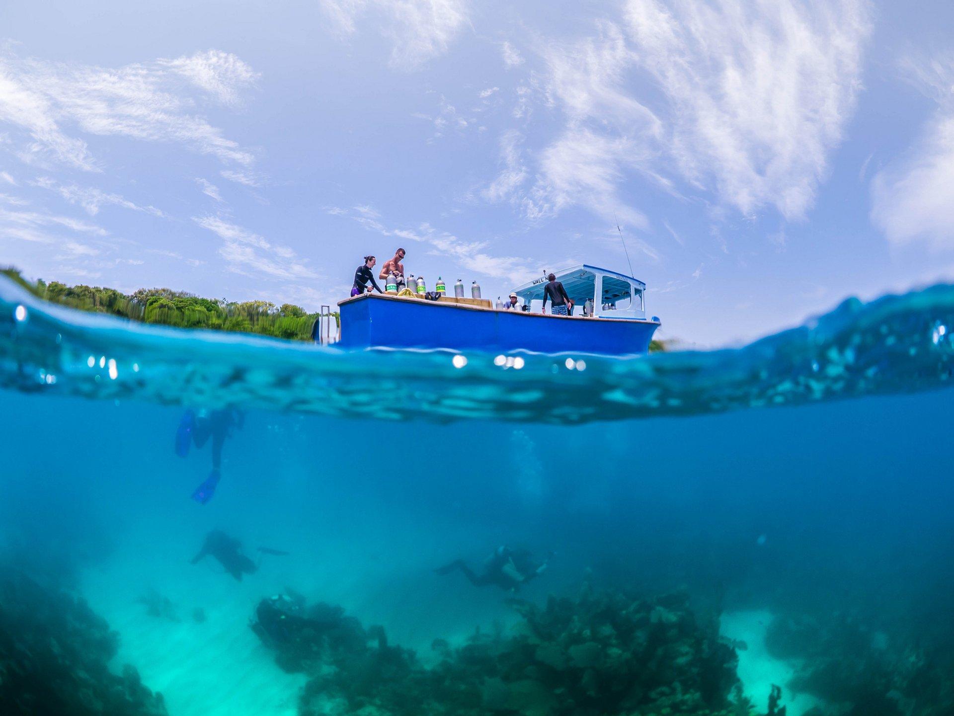 Diving in Honduras 2019 - Best Time
