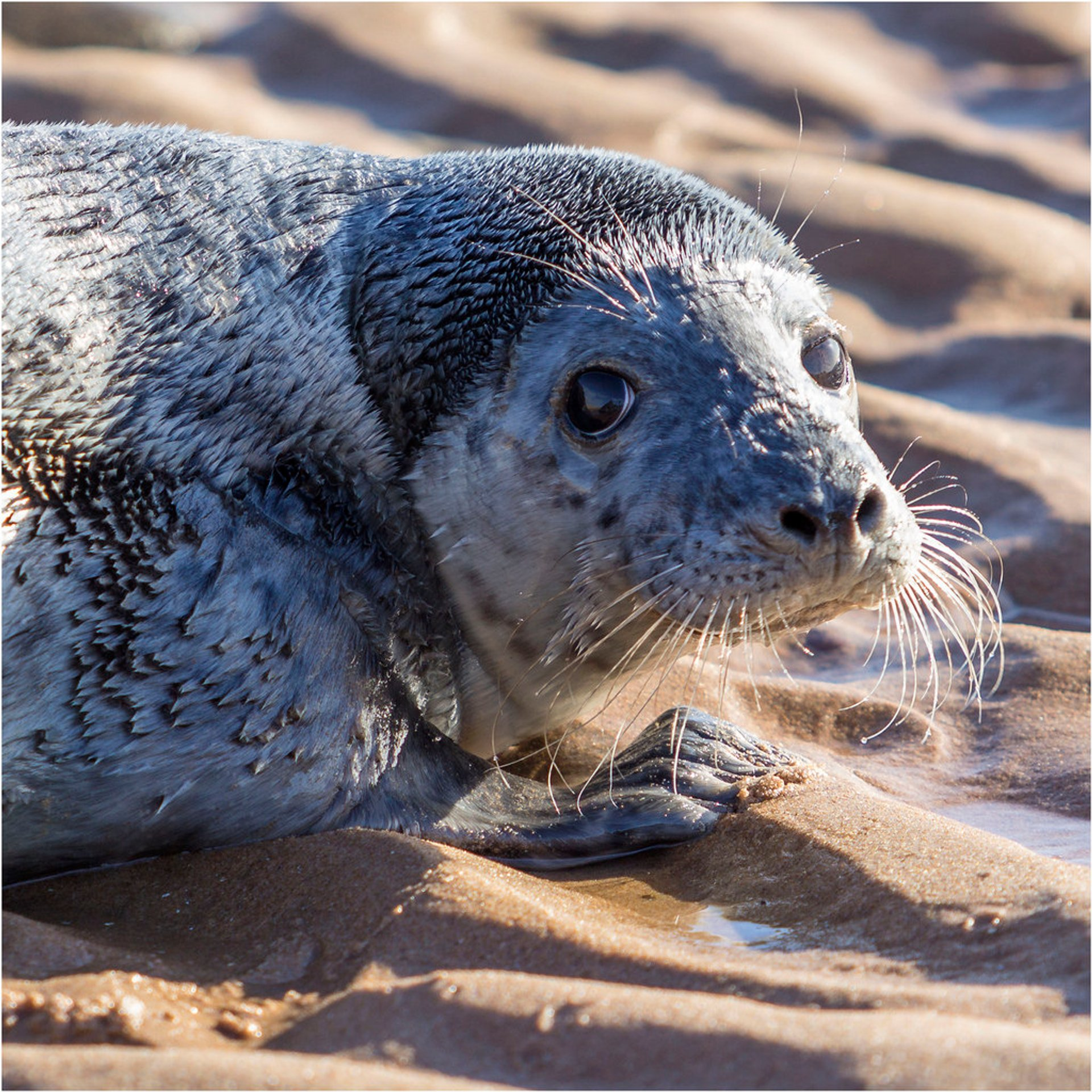Seal Pups in Scotland 2019 - Best Time