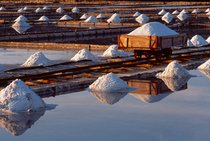 Cosecha de sal