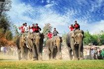 Elephant Racing Festival