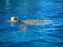 Tartarugas de mar
