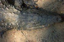 Caving with Crocodiles