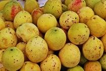Guayaba (Guava)