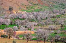 Almond Blossom Season