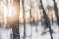 Randonnées forestières d'hiver