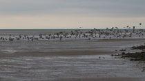 Aves marinhas em Glan y Môr Elias