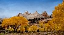 Utah Herbst Belaubung