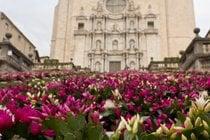 Girona Flower Festival (Temps de Flors)