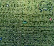 Cool Patch Kürbisse Mais Labyrinth
