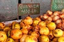 Guava or Guayaba