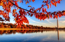 Fall Foliage in and around Washington, D.C.