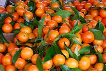 Corsican Clementines
