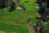 Terrazze per il riso