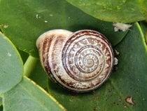 Snail Season