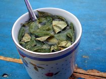 Coca Leaves Harvest