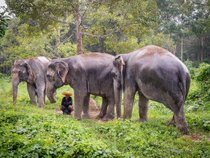 Elephant Sanctuaries
