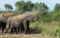 Elephant Safari in Udawalawe National Park