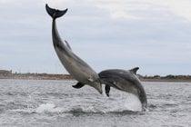 Observación de los delfines y las ballenas en Escocia