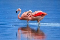 Flamingo Watching