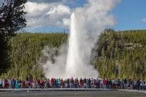 Vieux geyser fidèle