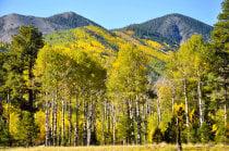 Cores de outono de Flagstaff