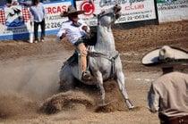 Rodeo messicano o Charreadas