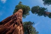 Parc national de la Sequoia