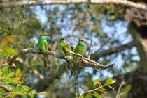 National Bird Watching Month