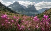 Parco nazionale del ghiacciaio Fiori selvatici