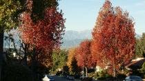 Couleurs d'automne près de Los Angeles