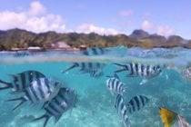Snorkeling et plongée
