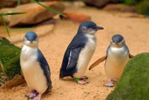 Phillip Island Pinguin Parade