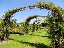 Helen S Kaman Rose Garden at Elizabeth Park