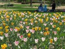 Lilacia Park