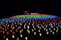 Enchanté: Forêt de lumière